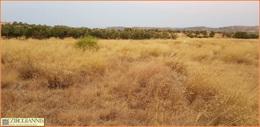 (For Sale) Land Plot for development || East Attica/Spata - 2.000 Sq.m, 150.000€